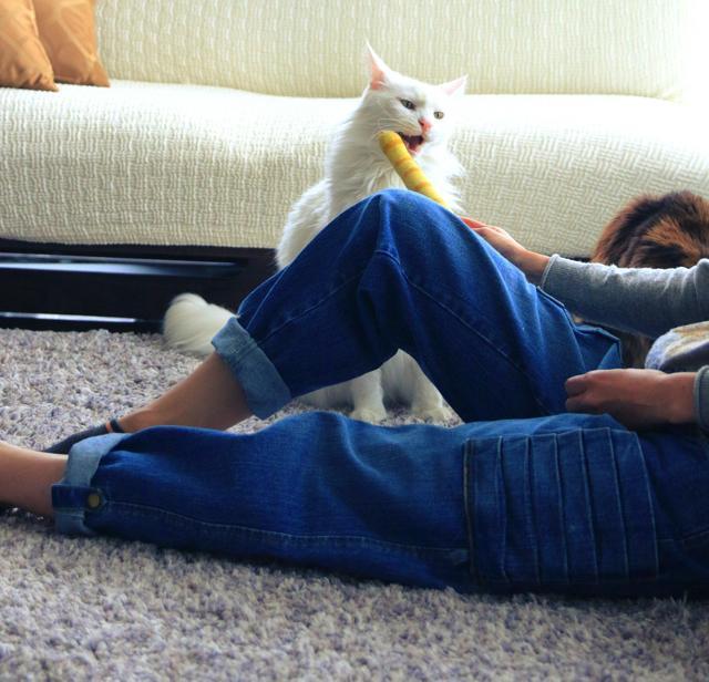 猫からモテまくる!? フェリシモ猫部×漫画家・山野りんりんの「猫モテジーンズ」登場