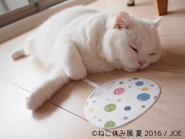 SNSなどで人気の話題の猫が大集合! 「ねこ休み展 夏 2016」が7月22日より期間限定で開催