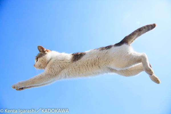 あの「飛び猫」が写真展になって開催! 猫グッズなども販売も